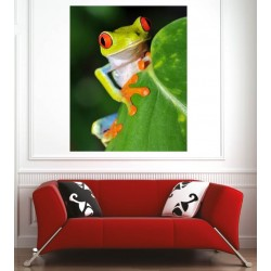 Affiche poster grenouille