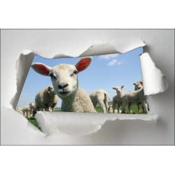 Sticker Trompe l'oeil agneau