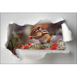Sticker Trompe l'oeil écureuil
