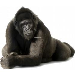 Sticker Gorille géant