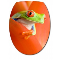 Sticker Abattant de WC Grenouille