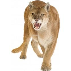 Sticker animal Puma