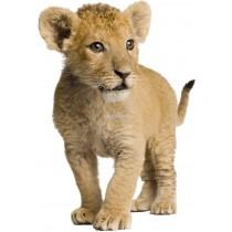 Sticker Lionceau