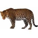 Sticker animal Leopard