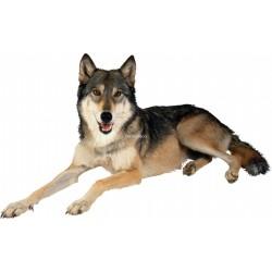 Sticker animal Loup