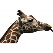 Sticker Tête de Girafe