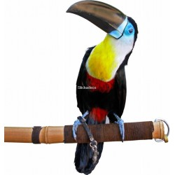 Sticker Toucan