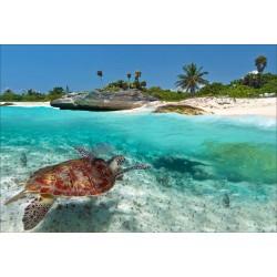 Stickers muraux déco: tortue de mer