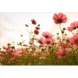 Stickers muraux déco: champ de fleur