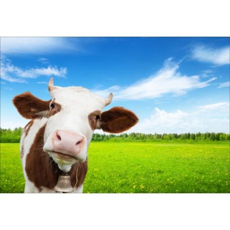 stickers muraux d co vache dans le pr art d co stickers. Black Bedroom Furniture Sets. Home Design Ideas