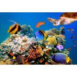 Stickers muraux déco: poissons tropicaux