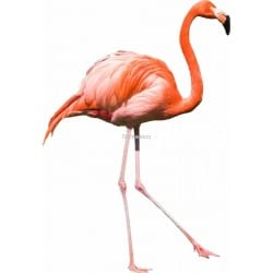 Sticker Flamand rose